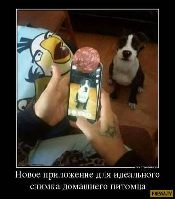 http://s7.uploads.ru/t/SfdtG.jpg