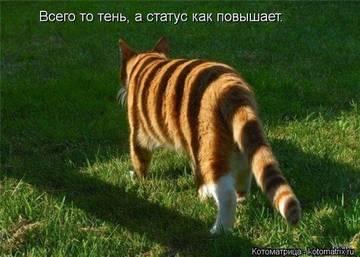 http://s7.uploads.ru/t/T3dGM.jpg