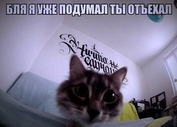 http://s7.uploads.ru/t/TN4yY.jpg