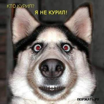 http://s7.uploads.ru/t/TYfGr.jpg