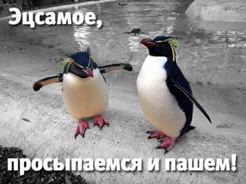http://s7.uploads.ru/t/Toh4A.jpg