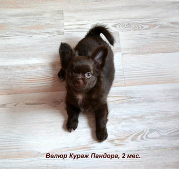 http://s7.uploads.ru/t/Tsb3n.jpg