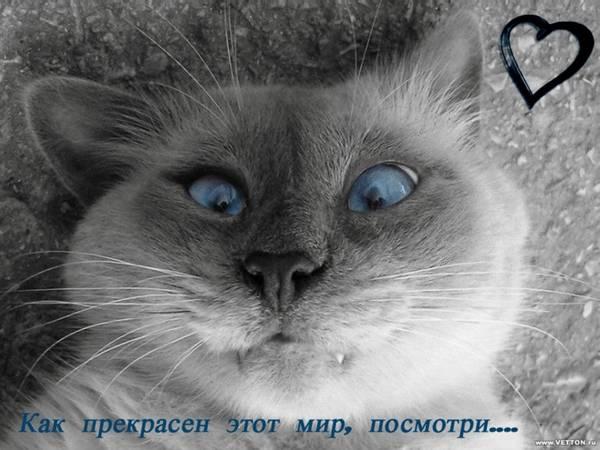 http://s7.uploads.ru/t/Uupqo.jpg
