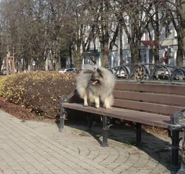 http://s7.uploads.ru/t/VnZir.jpg