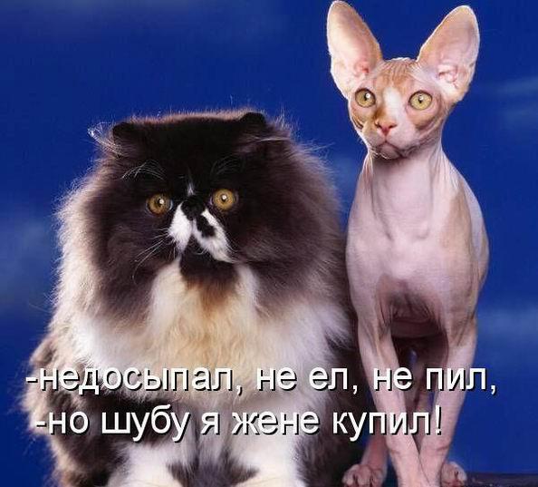 http://s7.uploads.ru/t/WBfyT.jpg