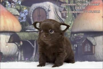http://s7.uploads.ru/t/XJYKg.jpg