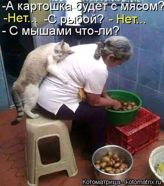 http://s7.uploads.ru/t/XsFnD.jpg