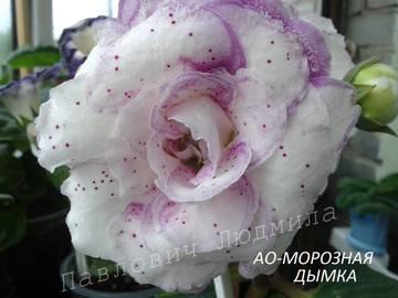 http://s7.uploads.ru/t/YSQpz.jpg