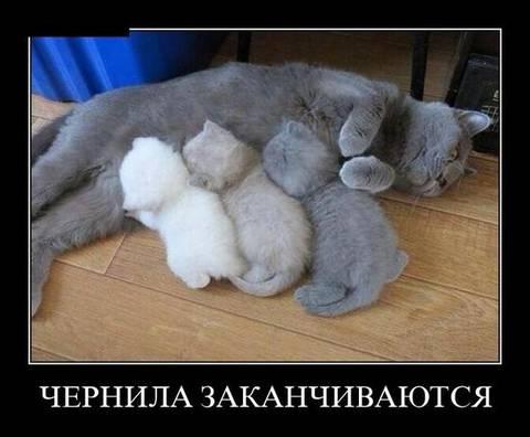 http://s7.uploads.ru/t/YWdK9.jpg