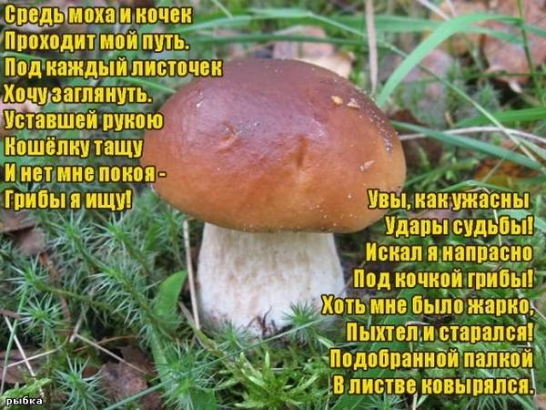 http://s7.uploads.ru/t/YhtLH.jpg