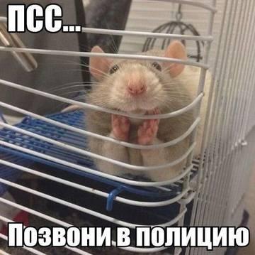 http://s7.uploads.ru/t/YzjiN.jpg