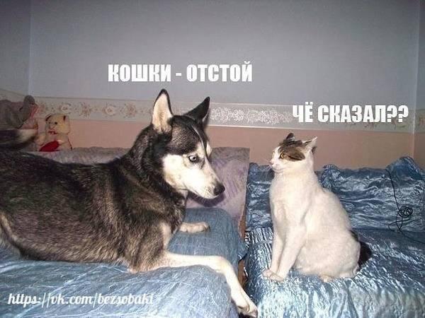 http://s7.uploads.ru/t/Z3Tx8.jpg