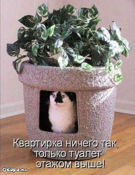 http://s7.uploads.ru/t/ZJW7z.jpg