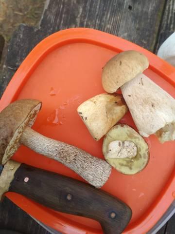 На грибные шашлыки