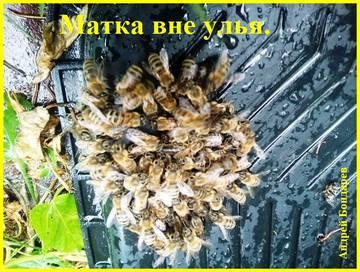 http://s7.uploads.ru/t/ZvG8z.jpg