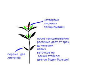http://s7.uploads.ru/t/a76Fi.jpg