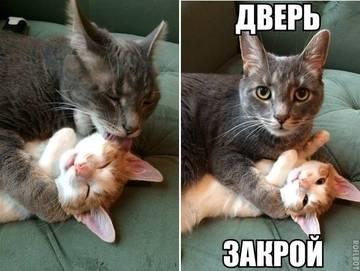 http://s7.uploads.ru/t/b2Xs8.jpg