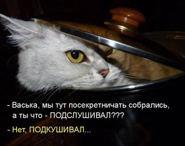 http://s7.uploads.ru/t/bWKVz.jpg