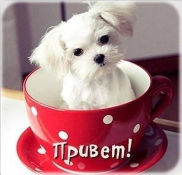 http://s7.uploads.ru/t/btu8x.jpg