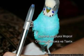 http://s7.uploads.ru/t/cPtVz.jpg