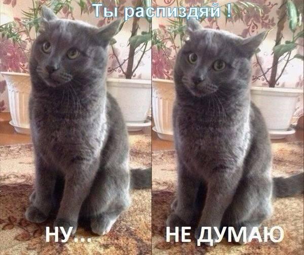 http://s7.uploads.ru/t/cS14d.jpg