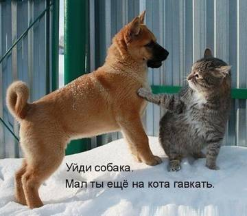 http://s7.uploads.ru/t/cZKm9.jpg