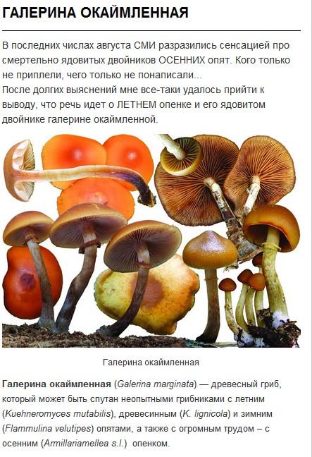 http://s7.uploads.ru/t/cjXAY.jpg