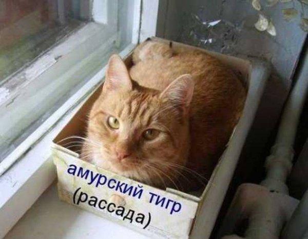 http://s7.uploads.ru/t/dPaiK.jpg