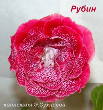http://s7.uploads.ru/t/fD4ye.jpg
