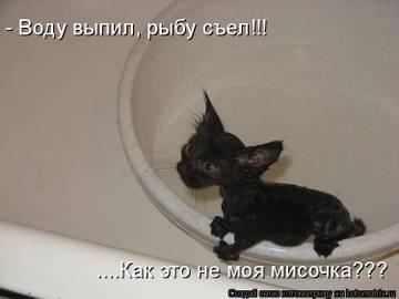 http://s7.uploads.ru/t/fIumv.jpg