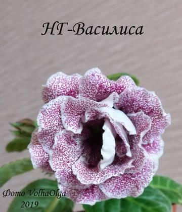 http://s7.uploads.ru/t/gHhXl.jpg