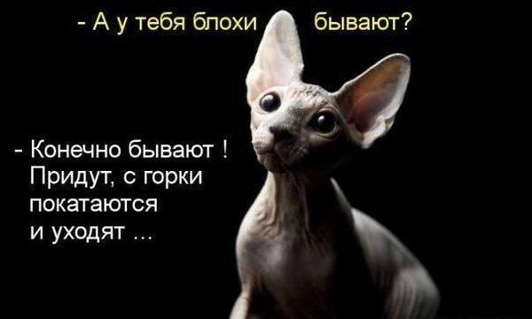 http://s7.uploads.ru/t/hHoxO.jpg