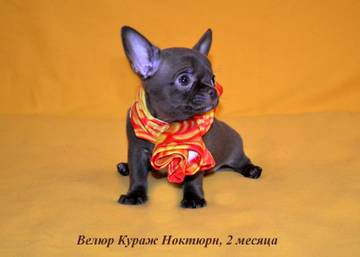 http://s7.uploads.ru/t/hq27j.jpg