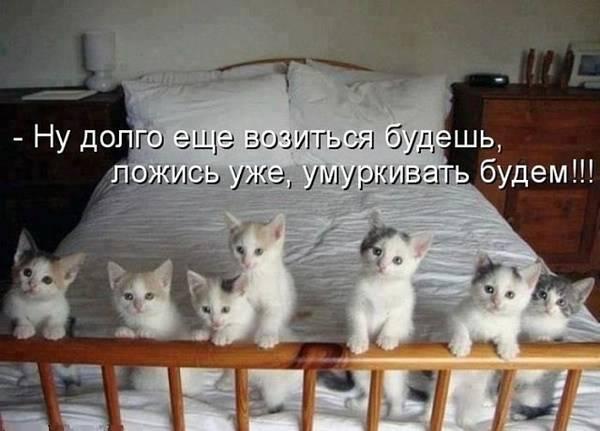 http://s7.uploads.ru/t/j9Z13.jpg