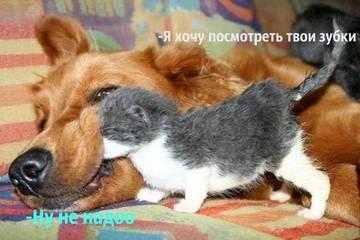 http://s7.uploads.ru/t/jTiyY.jpg