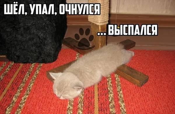 http://s7.uploads.ru/t/jUl9N.jpg