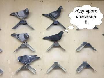 http://s7.uploads.ru/t/krGOE.jpg