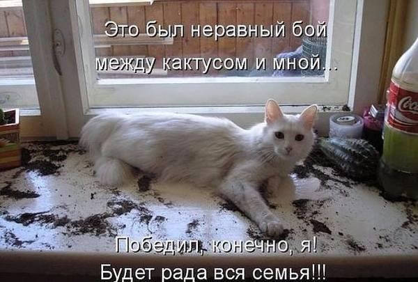 http://s7.uploads.ru/t/nSP1V.jpg