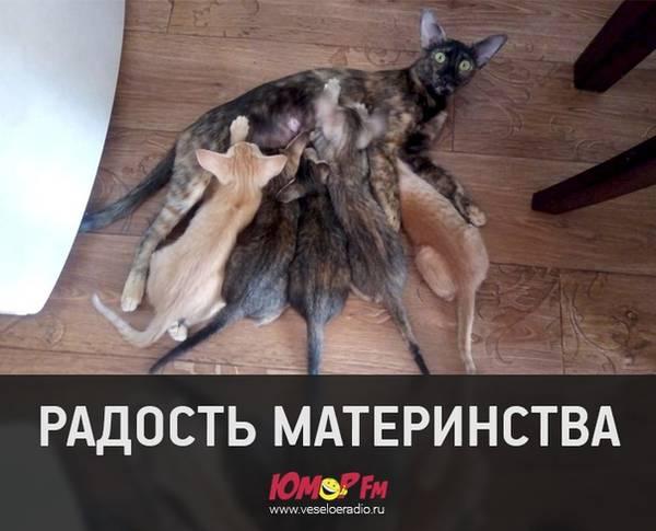 http://s7.uploads.ru/t/nWBqZ.jpg