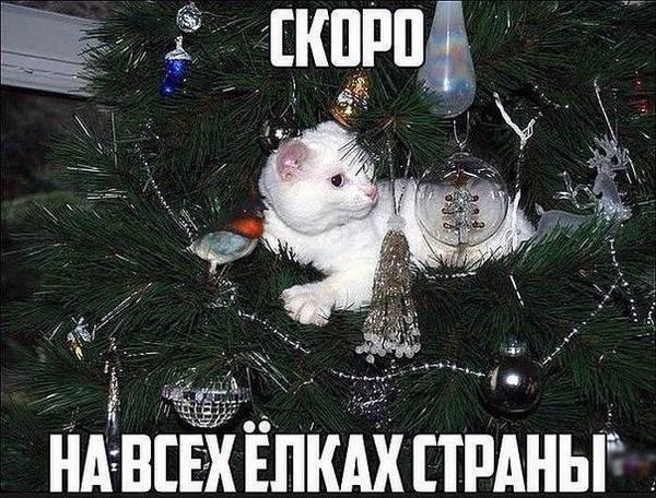 http://s7.uploads.ru/t/nxCys.jpg