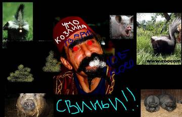 http://s7.uploads.ru/t/peuRa.jpg