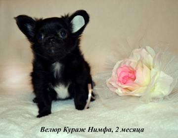 http://s7.uploads.ru/t/q2gbn.jpg
