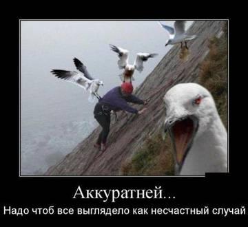 http://s7.uploads.ru/t/qdpcZ.jpg