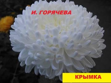 http://s7.uploads.ru/t/qpsHi.jpg