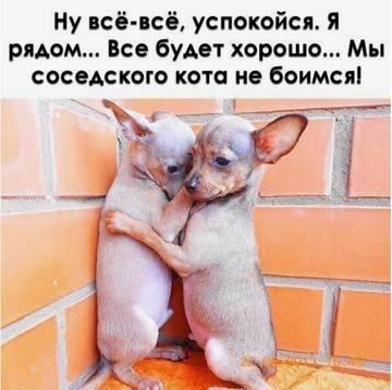 http://s7.uploads.ru/t/qv3ft.jpg