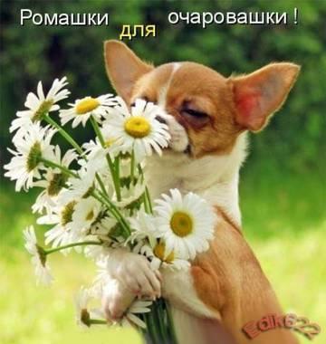 http://s7.uploads.ru/t/s23Bf.jpg