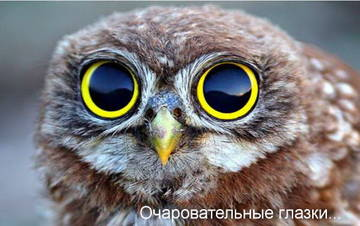 http://s7.uploads.ru/t/sWm3B.jpg