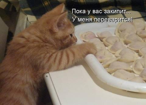 http://s7.uploads.ru/t/sfk2o.jpg