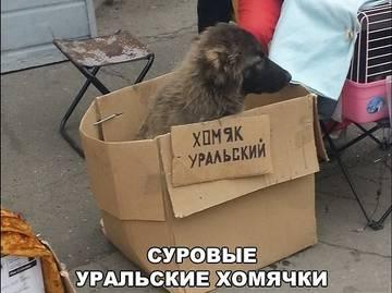 http://s7.uploads.ru/t/tLrJk.jpg