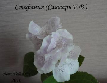 http://s7.uploads.ru/t/td95A.jpg